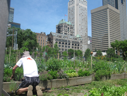 community garden1