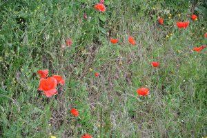 Normandie May 2015 098
