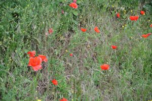 Normandie May 2015 098